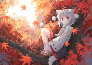 Rating: Safe Score: 43 Tags: animal_ears autumn forest hat inubashiri_momiji japanese_clothes kibisake leaves loli red_eyes short_hair skirt socks tail touhou tree white_hair wolfgirl User: otaku_emmy