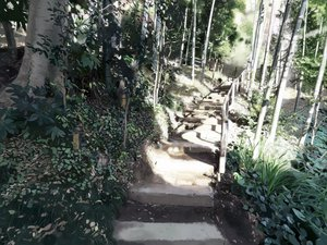 Rating: Safe Score: 96 Tags: forest iwamoto_maguro landscape original scenic stairs tree User: 秀悟