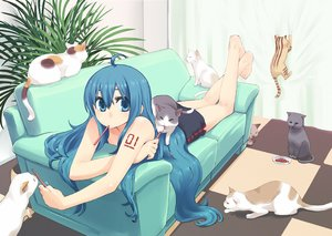 Rating: Safe Score: 98 Tags: animal barefoot blue_eyes blue_hair cat chan×co couch food hatsune_miku long_hair pocky vocaloid waifu2x User: FormX