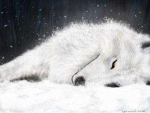 Rating: Safe Score: 54 Tags: animal wolf wolfs_rain User: Kulag