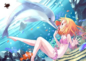 Rating: Questionable Score: 60 Tags: animal bikini blonde_hair dolphin fish flat_chest nomi original swimsuit tagme underwater water yellow_eyes User: gnarf1975