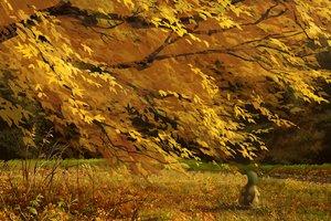 Rating: Safe Score: 50 Tags: autumn cyndaquil grass izna_(iznatic) leaves pokemon scenic tree User: mattiasc02