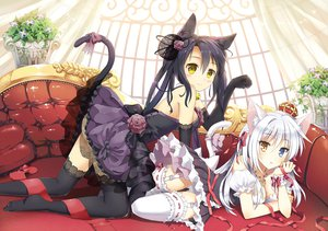 Rating: Safe Score: 540 Tags: 2girls animal_ears bell bicolored_eyes black_hair blush bow breasts catgirl cleavage crown dress elbow_gloves gloves long_hair mauve original panties ribbons tail thighhighs twintails underwear white_hair yellow_eyes User: SciFi