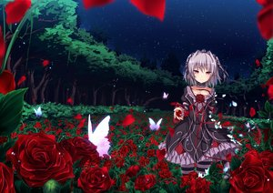 Rating: Safe Score: 103 Tags: butterfly dress flowers forest gray_hair hapymaher naitou_maia night petals red_eyes ribbons rose short_hair sky stars tail thighhighs tree ugume User: RyuZU