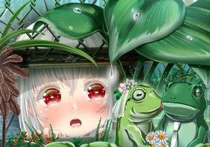 Rating: Safe Score: 36 Tags: abo_(kawatasyunnnosukesabu) animal blush flowers frog loli original red_eyes wedding wet white_hair User: RyuZU
