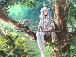 Rating: Safe Score: 117 Tags: achyue animal animal_ears arknights bird long_hair orange_eyes owl ptilopsis_(arknights) staff tree white_hair User: Nepcoheart