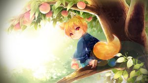 Rating: Safe Score: 46 Tags: animal_ears blonde_hair fruit japanese_clothes kimono kise_ryouta kuroko_no_basket short_hair tail tree yellow_eyes User: Maboroshi