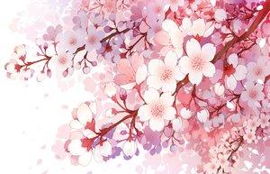 桜・花見の壁紙 1280×824px 1092KB