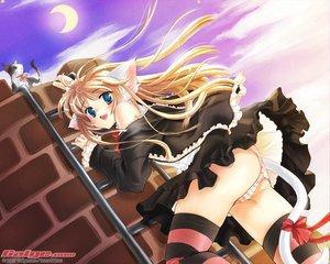 Rating: Safe Score: 35 Tags: animal animal_ears catgirl galge.com goth-loli headdress logo lolita_fashion nekou_izuru panties ribbons skirt striped_panties tail thighhighs underwear User: Oyashiro-sama