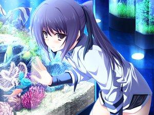 Rating: Safe Score: 119 Tags: animal fish game_cg iizuki_tasuku inubousaki_aya lovely_x_cation User: Maboroshi