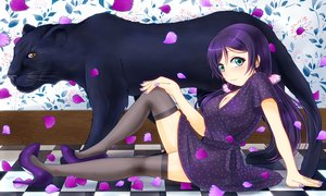 Rating: Questionable Score: 27 Tags: animal aqua_eyes breasts cleavage dress hiro9779 long_hair love_live!_school_idol_project petals purple_hair thighhighs toujou_nozomi twintails User: gnarf1975