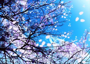 Rating: Safe Score: 131 Tags: cherry_blossoms flowers harupaka_@_kurenai_hiro_mi_08 petals sky tree User: opai