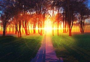 Rating: Safe Score: 154 Tags: 3d forest grass landscape original scenic shade sunset tree y-k User: Flandre93
