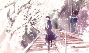 Rating: Safe Score: 9 Tags: all_male building cherry_blossoms flowers maeda_mic male nico_nico_singer petals polychromatic scenic soraru spring stairs tree utaite watermark User: FormX