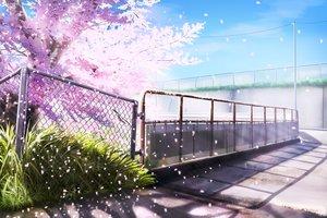 桜・花見の壁紙 2362×1575px 3119KB