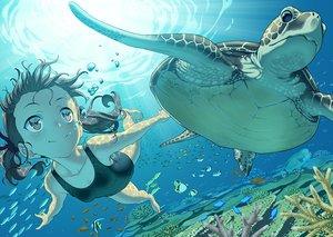 Rating: Safe Score: 56 Tags: animal black_hair brown_eyes bubbles fish loli original pairan swimsuit turtle twintails underwater waifu2x water User: RyuZU