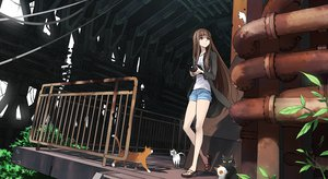 Rating: Safe Score: 190 Tags: animal brown_hair camera cat kriss_sison long_hair User: opai